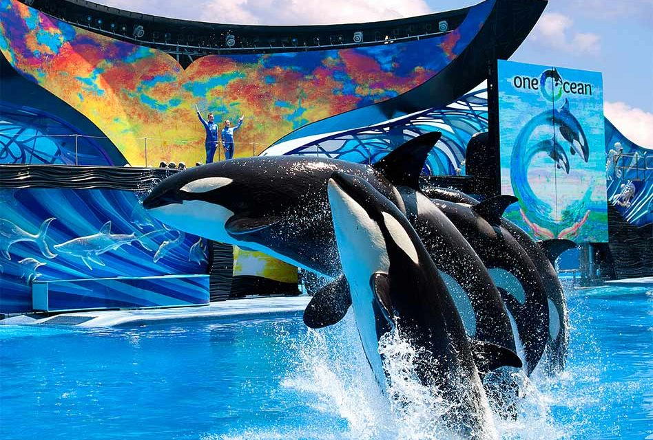 SeaWorld Orlando Reopens Today With a Florida Residents Buy One Get One Free!