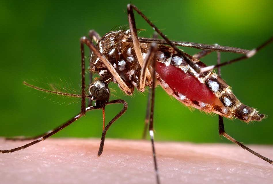 Osceola County to Begin Aerial Mosquito Spraying 50,000 Acres Thursday