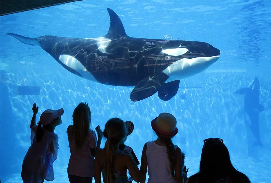 SeaWorld Orlando Launches New Whale Up-Close Tour