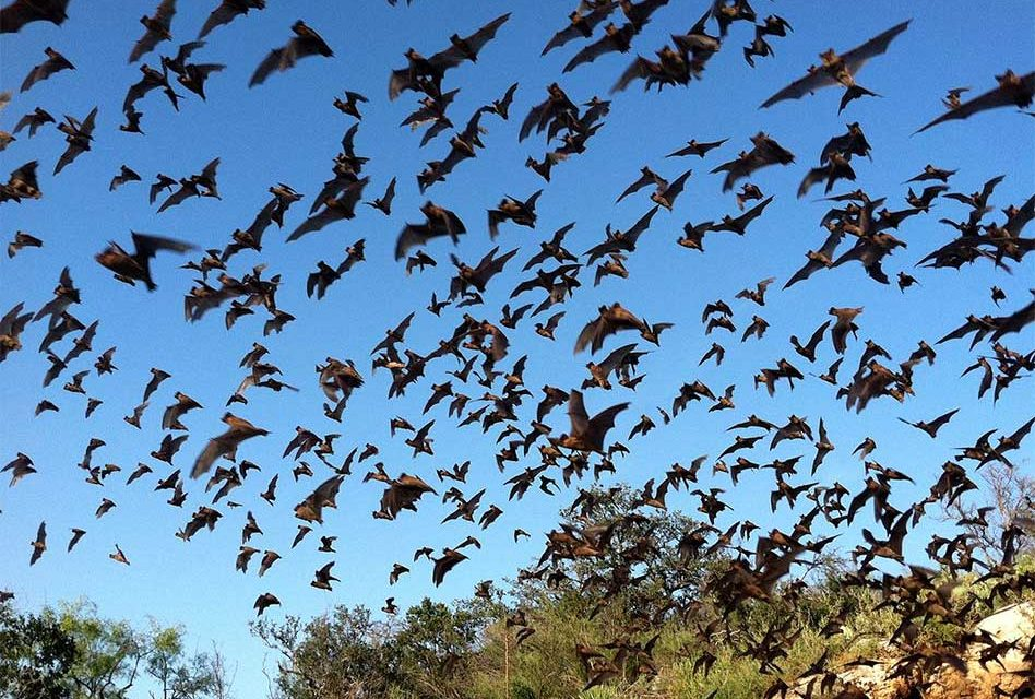 Positively Osceola's Wildlife Wednesday With Florida Bats!