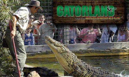 Gatorland Remains Open Until 5pm Today Prior To Arrival of Hurricane Irma