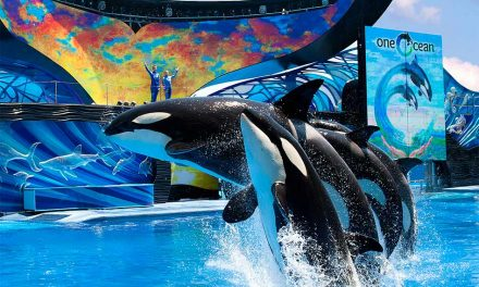 "SeaWorld and Aquatica tickets at ""Welcome Back"" prices through June 21"
