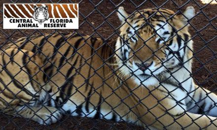 Central Florida Animal Reserve Opens to the Public in Osceola County!