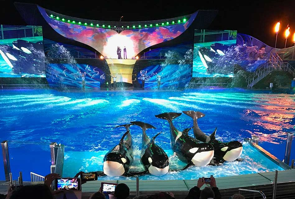 Experience the Majesty and Beauty of Christmas with SeaWorld's Shamu Miracles