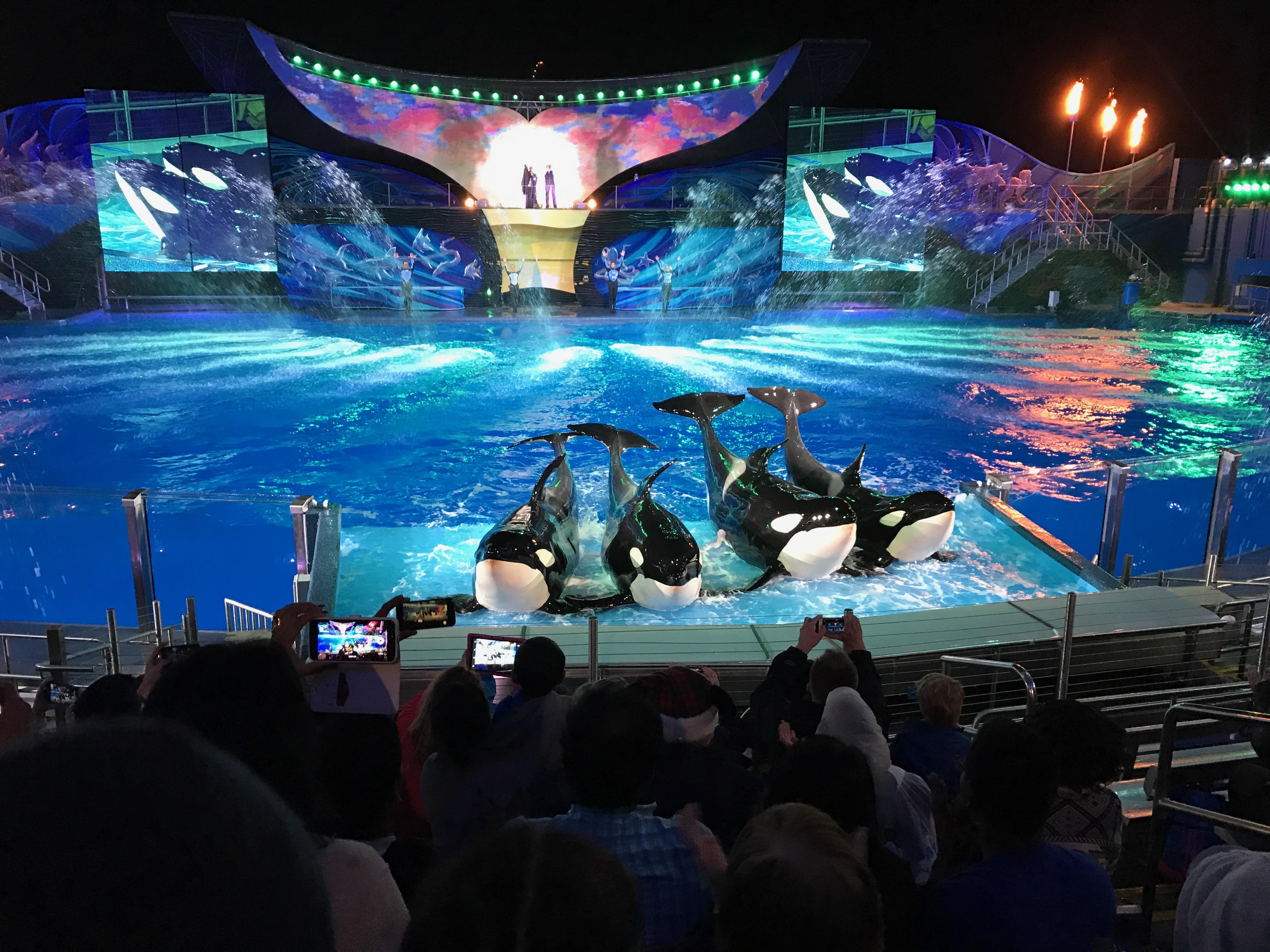 SeaWorld's Christmas: 11/24 - 12/31