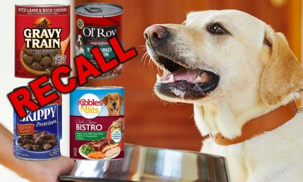 Dog Food Recalled Over Euthanasia Drug Concerns
