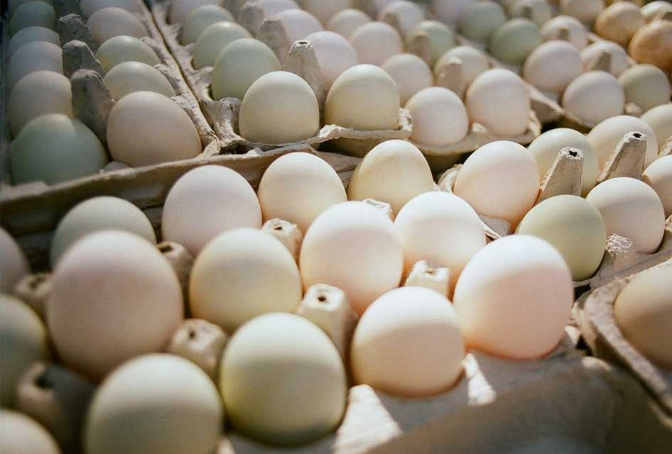 More than 200 Million Eggs Recalled in U.S. Over Salmonella Fears, Including Florida