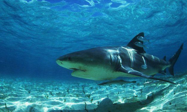 Keep Shark Week Going All Year Long