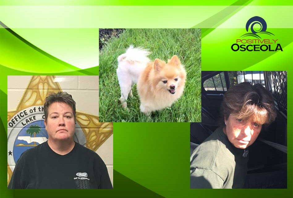 Stolen Service Dog Returned to 67 Year Old Man With PTSD, Suspects Arrested