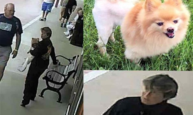 Service Dog Stolen from 67 Year Old Man With PTSD