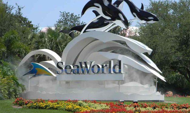 30-year-old Orca Kayla, Dies at SeaWorld Orlando