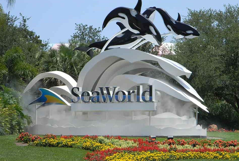 30-year-old Orca Kayla, Dies at SeaWorld Orlando