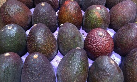 Henry Avocado Corporation Recalls Whole Avocados Due to Possible Listeria Contamination