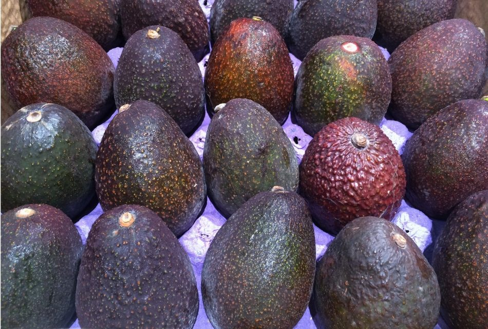 Henry Avocado Corporation Recalls Whole Avocados Due to Possible Listeria Contamination