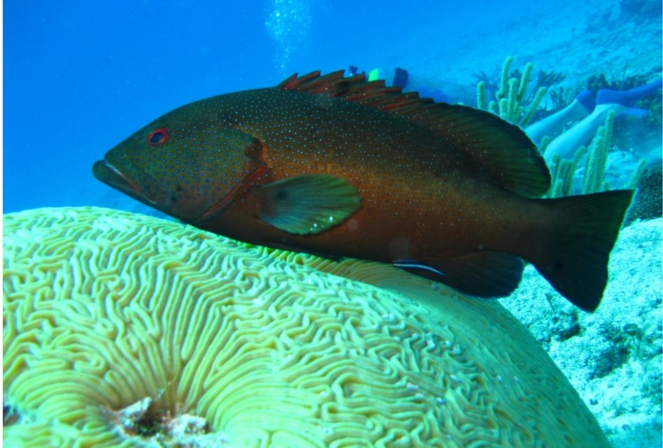 Global Warming Hits Sea Creatures The Hardest According to New Research