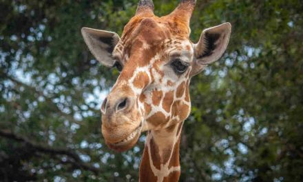 Brevard Zoo to Offer $5 Admission for Florida Residents on May 31