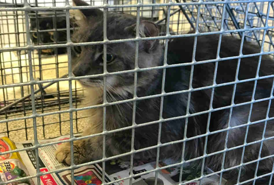 SNiP-it Provides Solution to Osceola County's Feral Cat Overpopulation