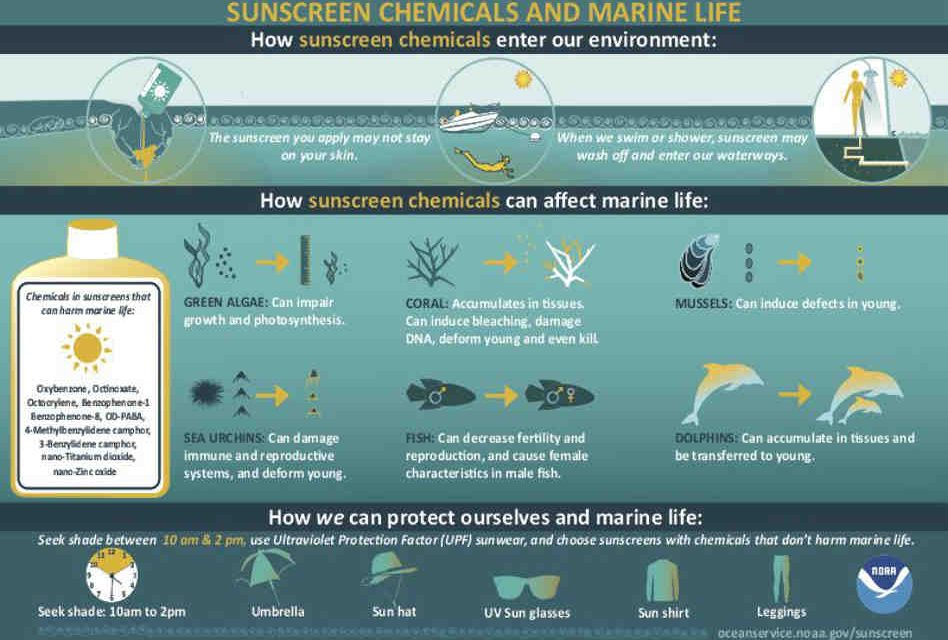 NOAA Researchers Discover Sunscreen Chemicals Threaten Corals and Other Marine Life