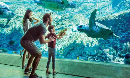 Join SeaWorld for World Oceans Day and World Sea Turtle Day