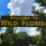 Five Things To Add To Your Agenda When Visiting Wild Florida