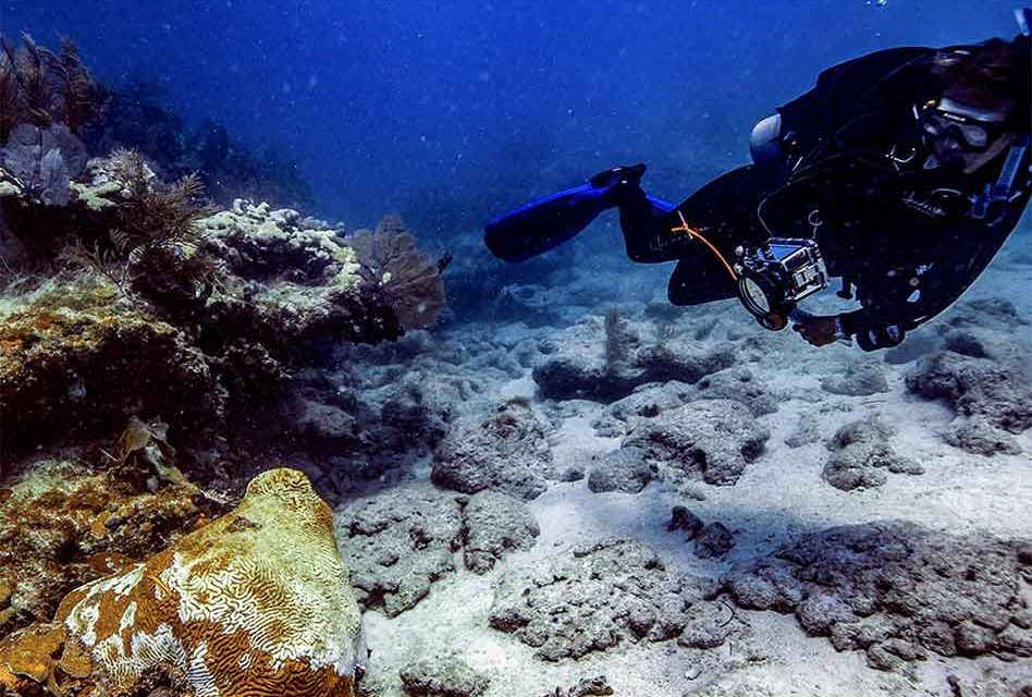 FWC Applauds Governor DeSantis' Budget Focus on Red Tide Research and Coral Reef Disease Restoration