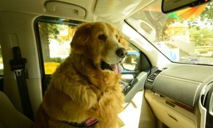 Breaking a Car Window to Rescue a Furry Friend is Legal in Florida