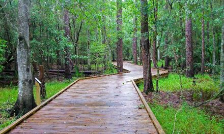 Today is National Hop-a-Park Day… a Perfect Day to Experience Parks in Osceola County