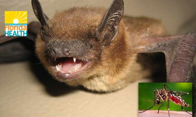 Rabies and West Nile Virus Reported in Osceola County : Here's What You Should Do!