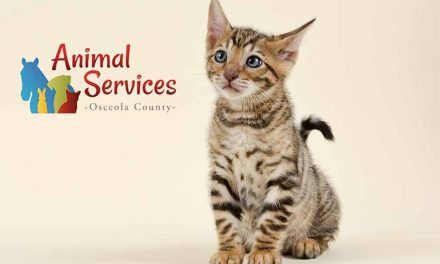 Adopt a cat or dog this week from Osceola County Animal Services for just $20!