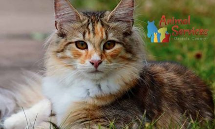 Free Osceola County workshop: How to help cats in your community