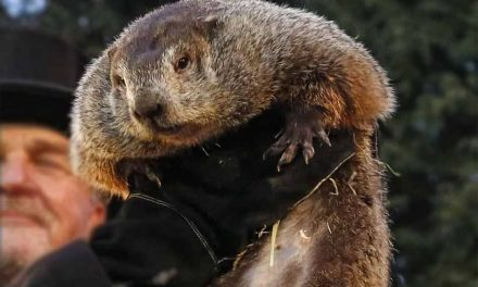 Groundhog day announcement: Punxsutawney Phil doesn't see his shadow, predicts early spring