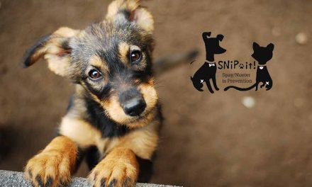 SNiP-It Spay/Neuter Clinic in need of volunteers and donations of time