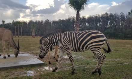 Wild Florida's Drive-through safari open, but rest will close Monday due to COVID-19