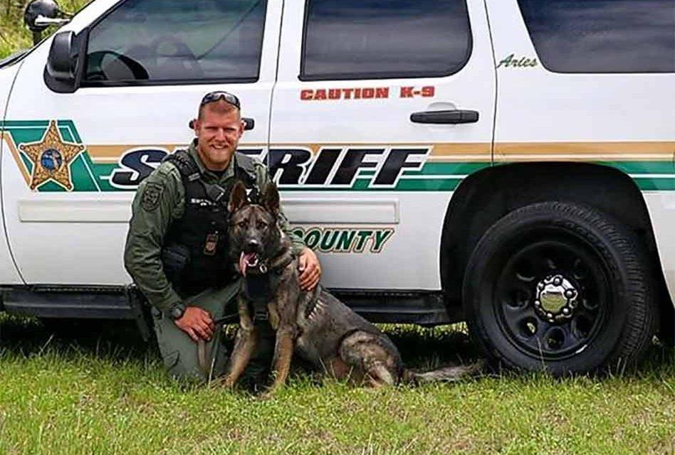 Vested Interest in K9s provides 4 Osceola Sheriff's Office dogs new protective vests