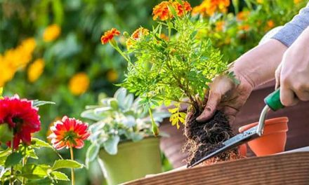 On National Gardening Day, liven up that house you're staying at with plants and flowers, fruits and veggies