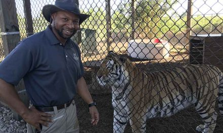 Central Florida Animal Reserve brings big cats to fans with online mini-educational series