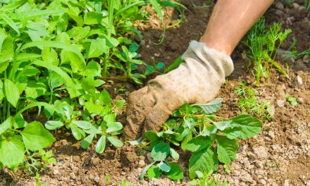 June 13 is National Weed Your Garden Day, so put on some gloves and get pullin'!