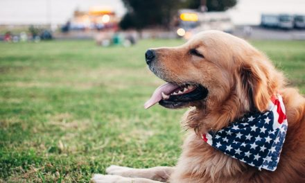 Safety around fireworks includes you and your dogs
