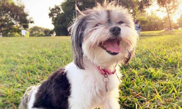 The summer heat can be a challenge for people, and for our furry friends too!