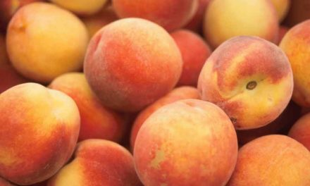 Peaches sold at Aldi, Target, Walmart, and Kroger have been recalled after Salmonella outbreak
