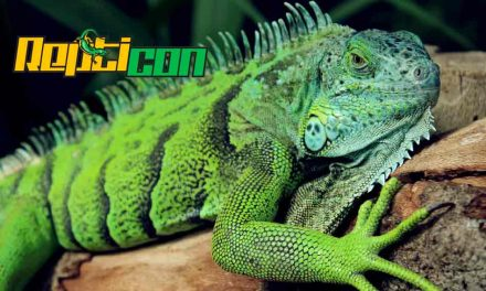 Repticon returns to Osceola Heritage Park in Kissimmee for two days in September!