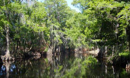 Osceola County to begin Shingle Creek vegetation and debris removal