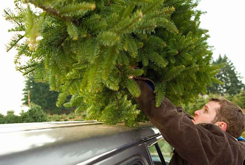 How to get your Christmas tree home safe and sound this year