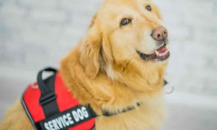 Airlines crack down on emotional support animals, require federal form for certified service dogs