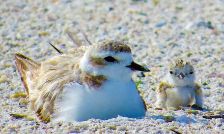 FWC: Five ways the community can help Florida's nesting waterbirds