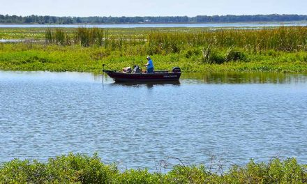 Florida Fish and Wildlife Commission treating Lake Toho for hydrilla and other aquatic plants this week