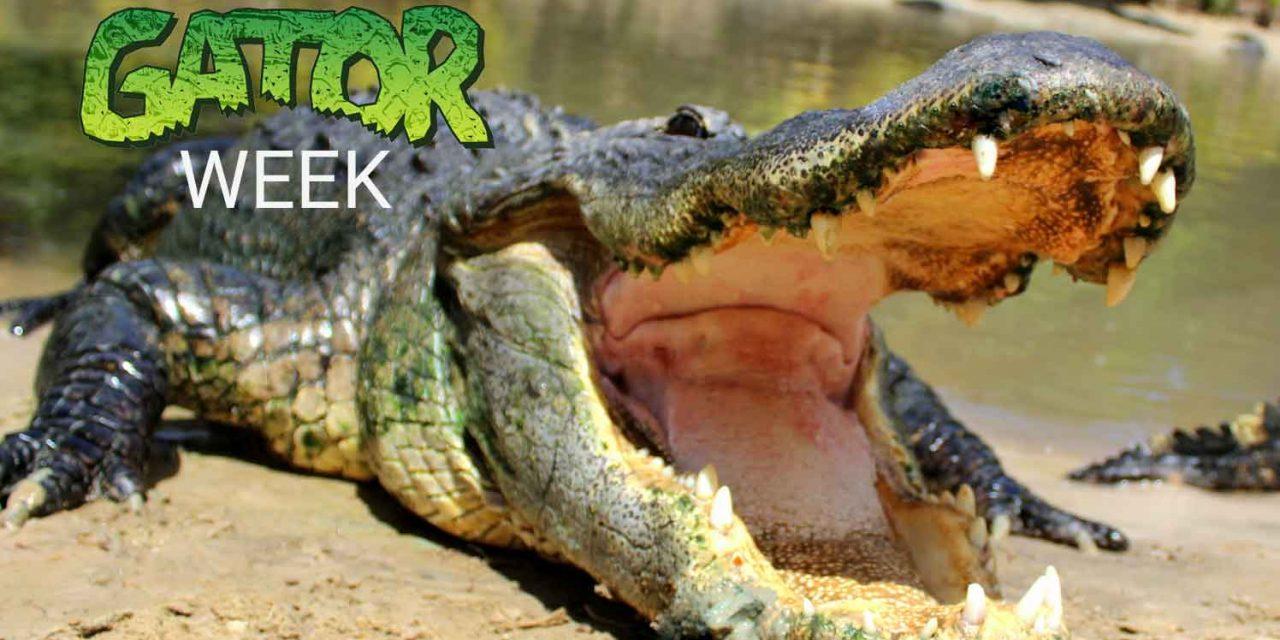 Wild Florida to host Gator Week with free Gator Park admission & National Alligator Day celebrations