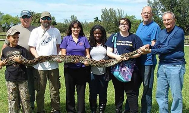 FWC looking for help in controlling wild Burmese pythons in Florida. Are you up to the Challenge?