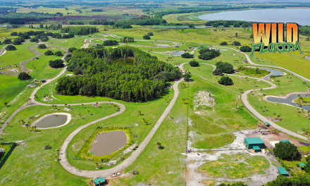 Wild Florida doubles the size of its Drive-thru Safari, officially opens it to the public