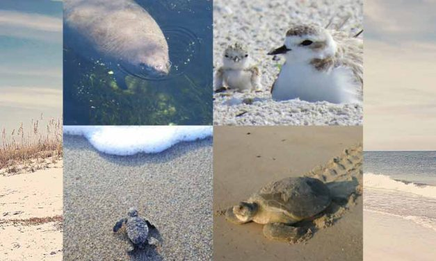 FWC: Celebrate Independence Day the Floridian way with these wildlife-friendly tips